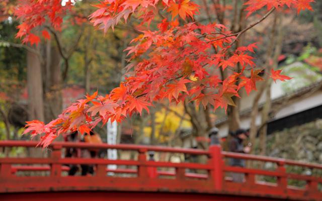 両界山横蔵寺の紅葉