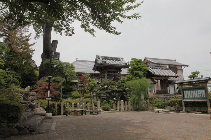 玉泉寺・大ケヤキ