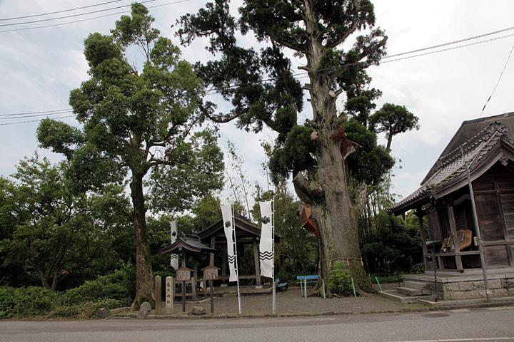 月見宮大杉と福島正則陣跡