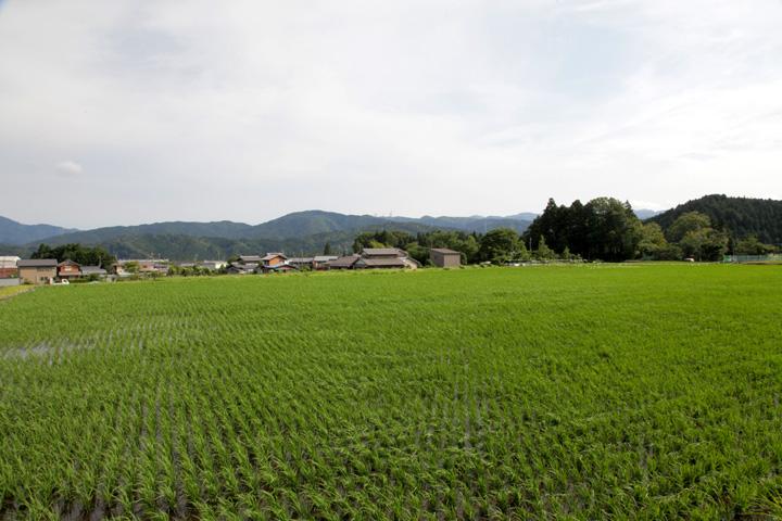 決戦地から見た松尾山方面