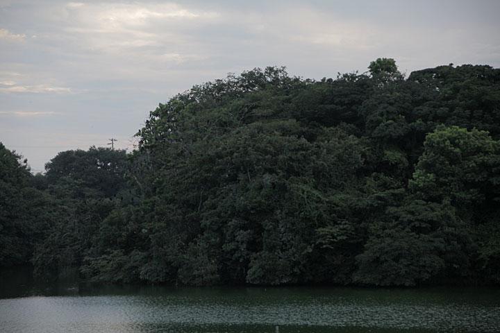 鵜の山鵜繁殖地