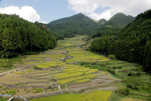 四谷 千枚田(新城市)