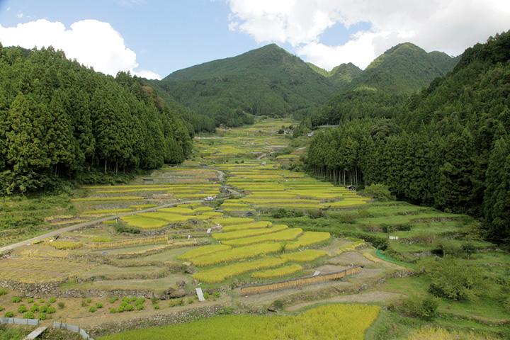 四谷千枚田