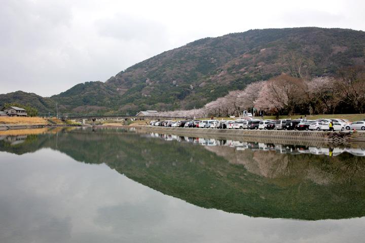 五十鈴川堤(伊勢市)