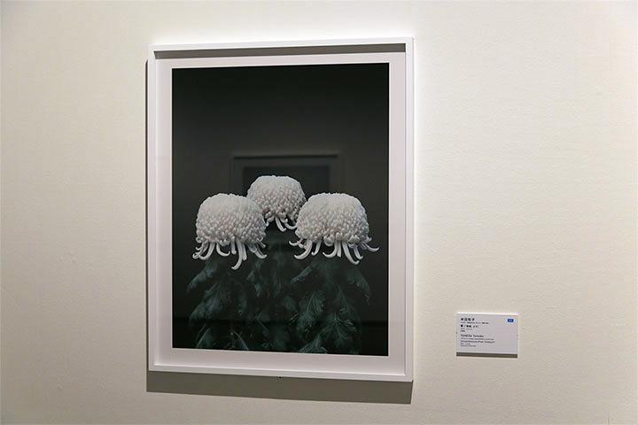 米田知子《菊(「積雲」より)》愛知県美術館10階
