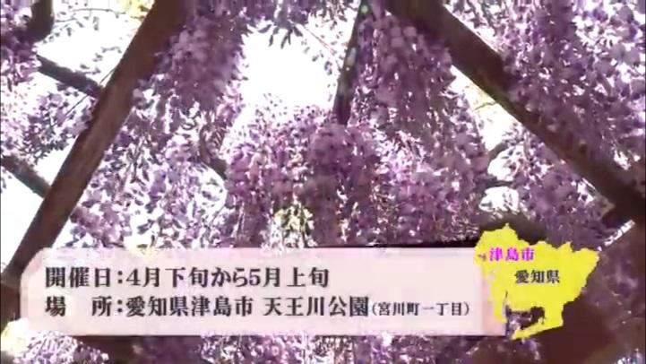 【津島市公式】 「尾張津島藤まつり」プロモーションビデオ